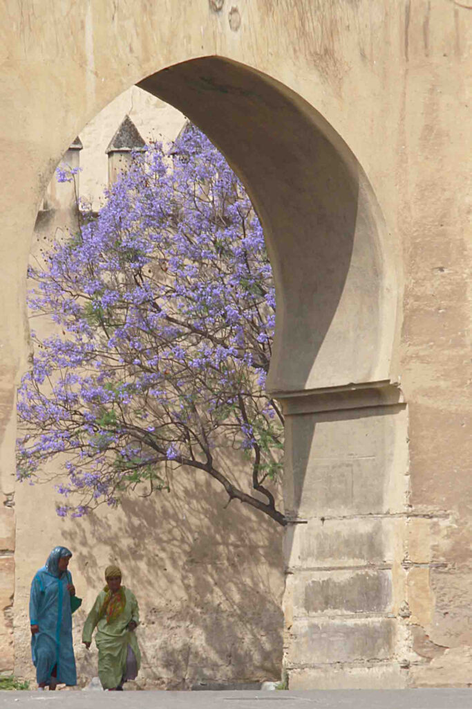 One of Fez Medina Gate